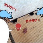 【畳ライダーの日常】ねずみ穴も綺麗に手直し。